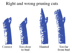 The Perfect Pruning Cut