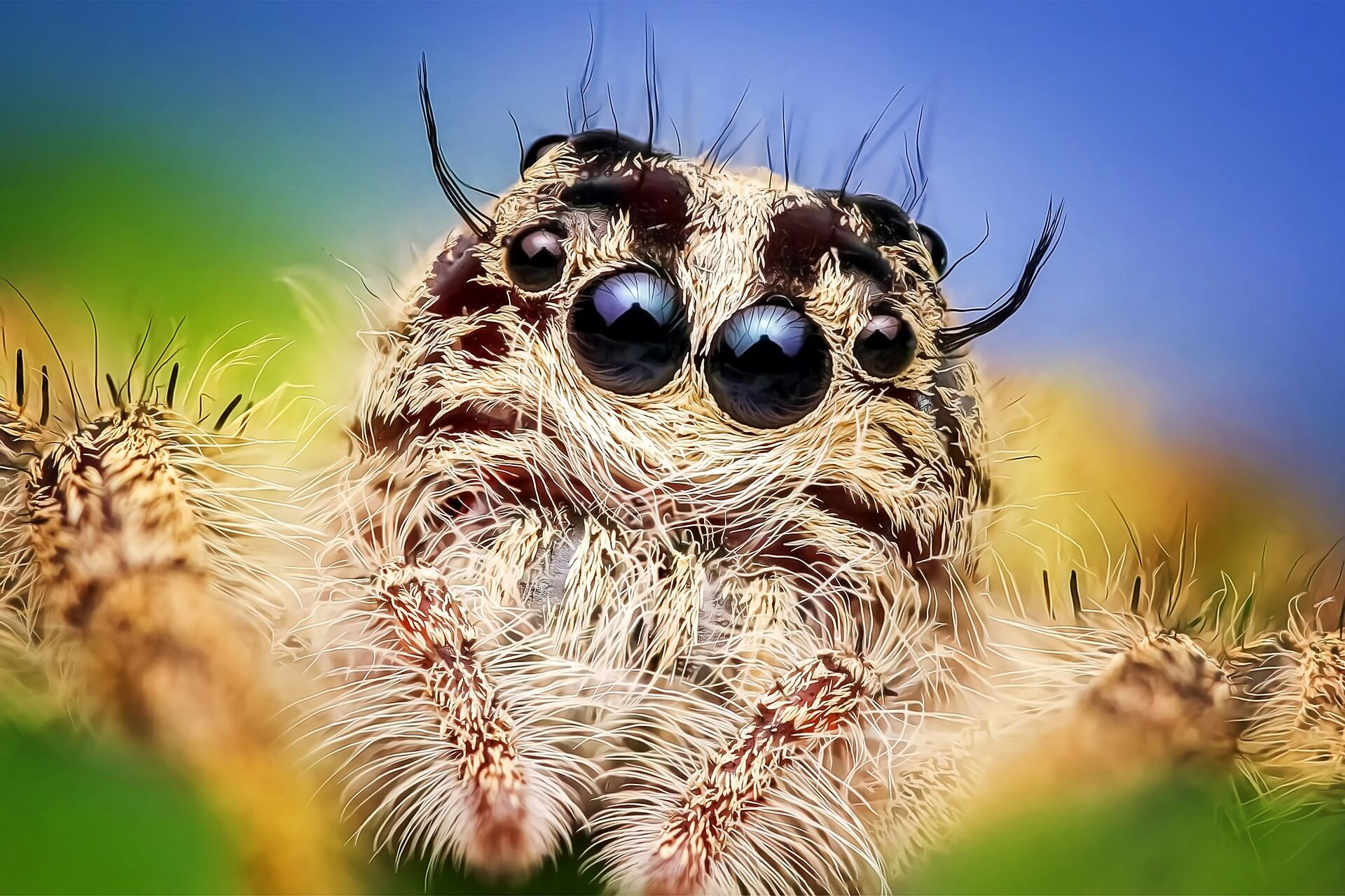 why spiders are good for your garden